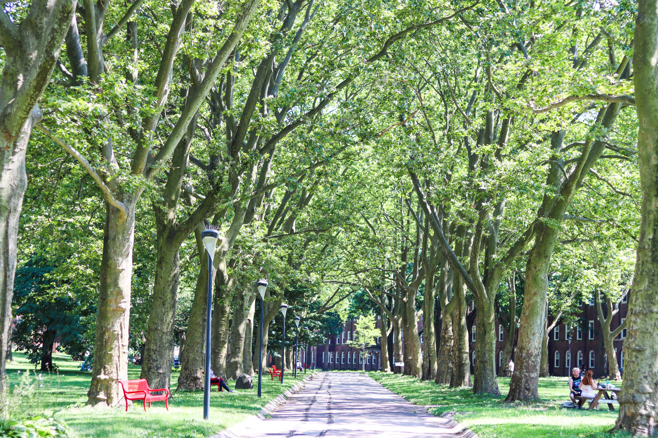 Tree lined walking path on Governors Island
