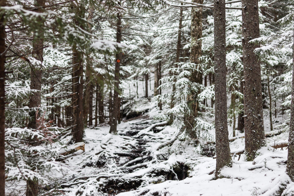 Views of snowy trees on Mount Jo hike