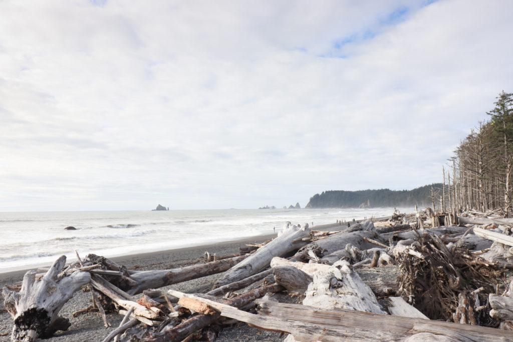 Driftwood on ONP beaches