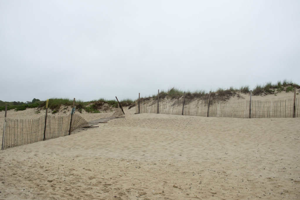 A view of sand dunes on A view of the shoreline at one of the Martha's Vineyard beaches