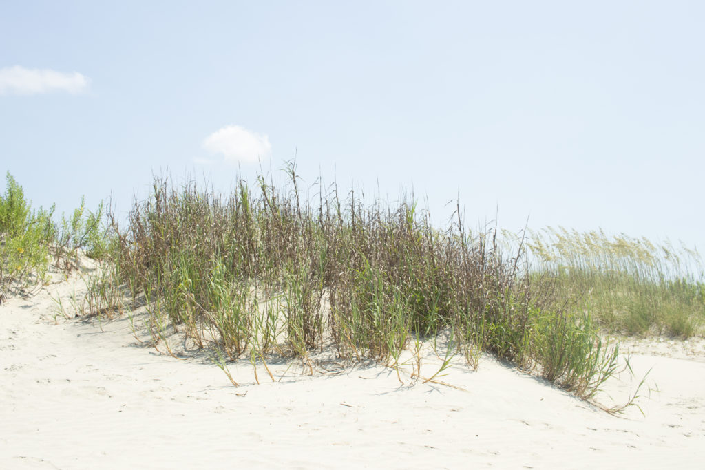Beach grass at one of the Sandy Hook beaches.